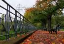 Rückblick auf feuchtmilden Oktober